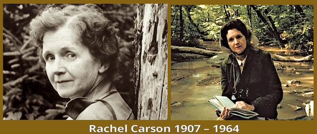 Rachel Carson 1907-1964 copy