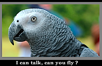 I can talk can you fly?