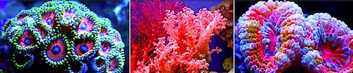 3 corals