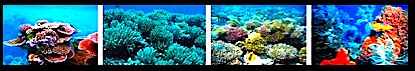 4 coral images
